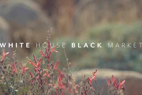 White House Black Market is Hiring!